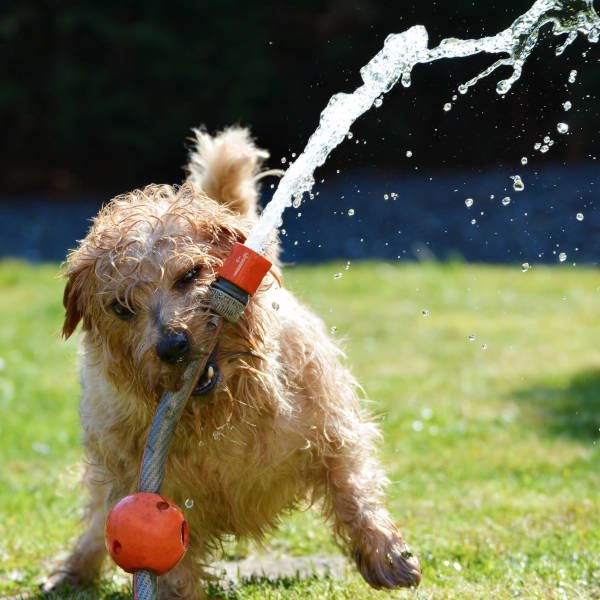 Dog playing with a hose pipe