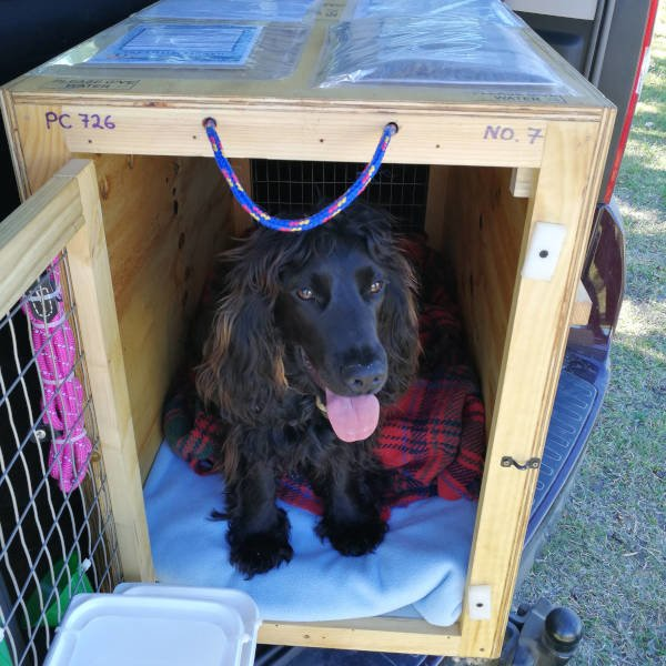 Custom made international pet travel box from Paws and Claws